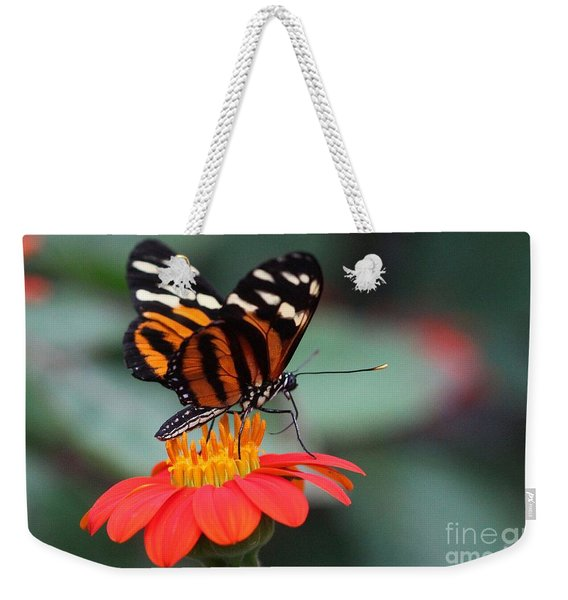 Weekender Tote Bag featuring the photograph Black And Brown Butterfly On A Red Flower by Jeremy Hayden