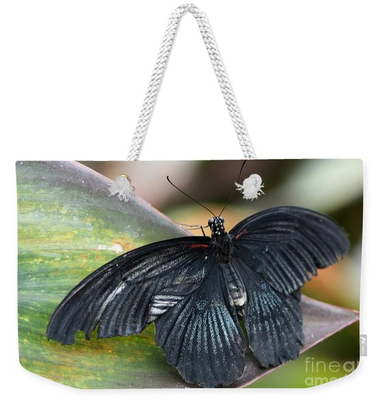 Weekender Tote Bag featuring the photograph Black Butterfly by Jeremy Hayden