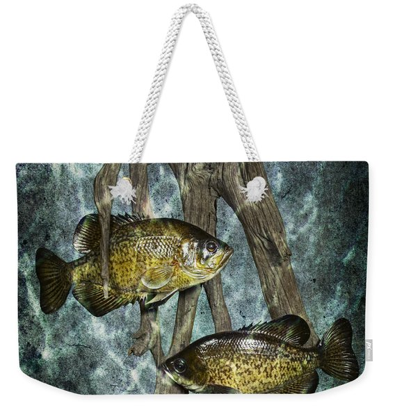 Black Crappies A Fish Image No 0143 Blue Version Weekender Tote Bag