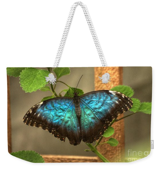 Weekender Tote Bag featuring the photograph Blue And Black Butterfly by Jeremy Hayden
