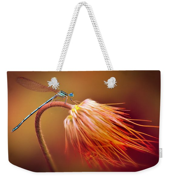 Weekender Tote Bag featuring the photograph Blue Dragonfly On A Dry Flower by Jaroslaw Blaminsky