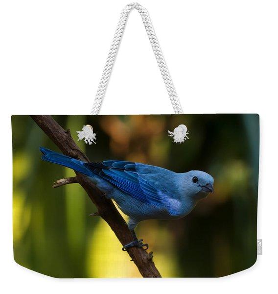 Blue Grey Tanager Weekender Tote Bag
