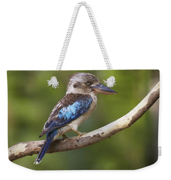 Blue-winged Kookaburra Queensland Weekender Tote Bag