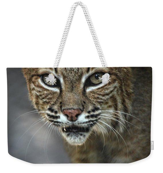 Bobcat Stare Weekender Tote Bag