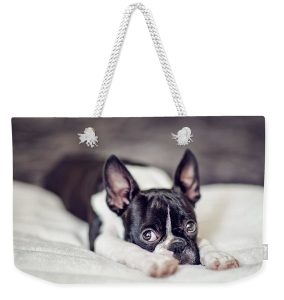 Boston Terrier Puppy Weekender Tote Bag