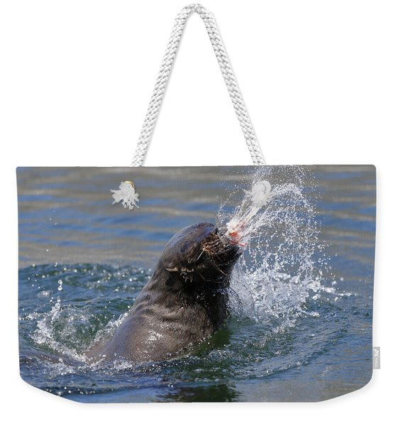 Brown Fur Seal Throwing A Fish Head Weekender Tote Bag