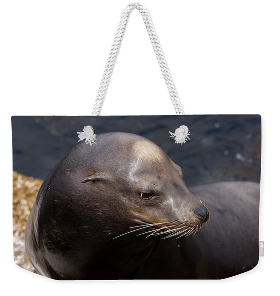 California Sea Lion Weekender Tote Bag