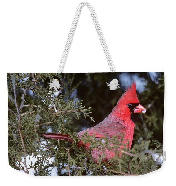 Cardinal Cardinalis Cardinalis In Pine Weekender Tote Bag