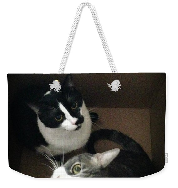 Tabby Cat Kitten Photography Pets  Weekender Tote Bag