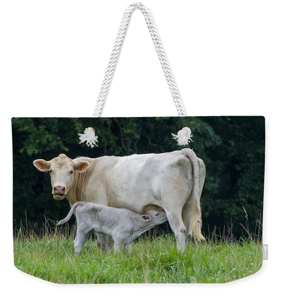 Charolais Cattle Nursing Young Weekender Tote Bag