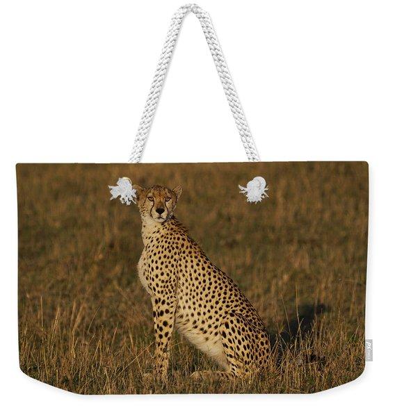 Cheetah On Savanna Masai Mara Kenya Weekender Tote Bag