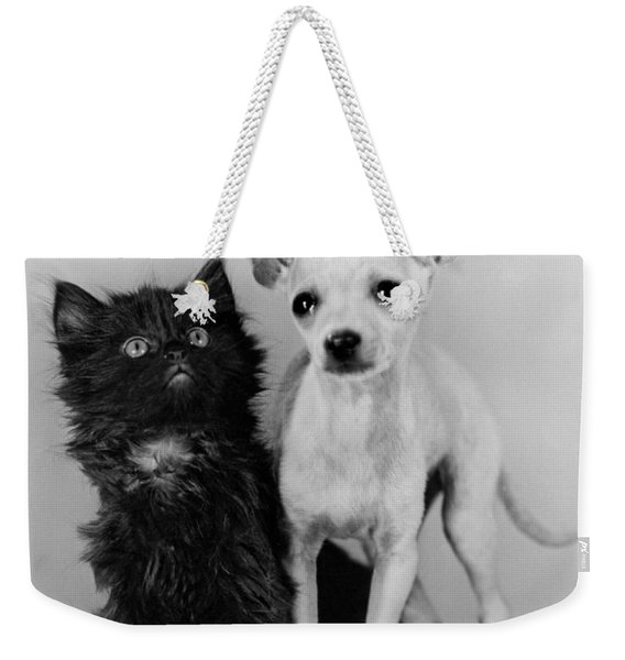 Chihuahua Has Kitten Sidekick Weekender Tote Bag