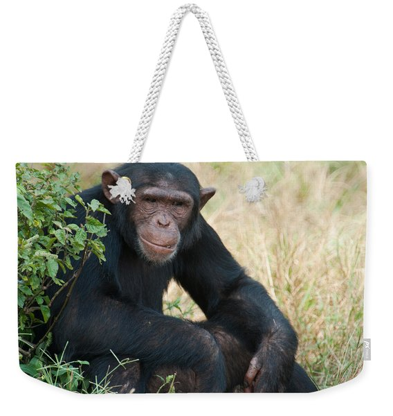 Chimpanzee Pan Troglodytes In A Forest Weekender Tote Bag
