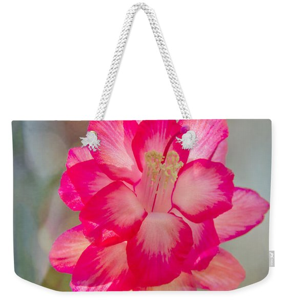 Weekender Tote Bag featuring the photograph Christmas Cactus Bokeh by Jemmy Archer