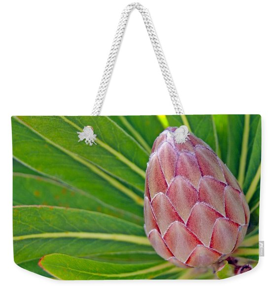 Close Up Of A Protea In Bud Weekender Tote Bag