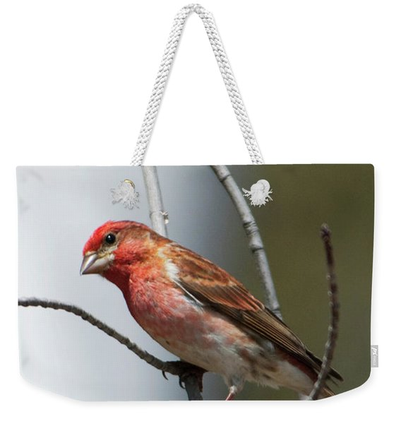 Close-up Of A Red-headed Purple Finch Weekender Tote Bag