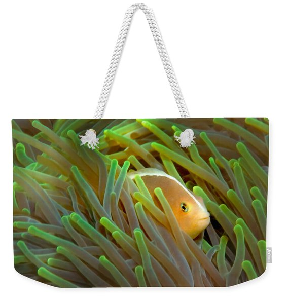 Close-up Of A Skunk Anemone Fish Weekender Tote Bag