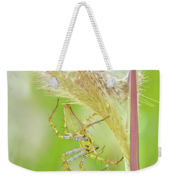 Close-up Of Green Lynx Spider Peucetia Weekender Tote Bag