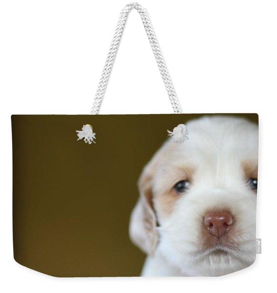 Cocker Spaniel Puppy  Weekender Tote Bag
