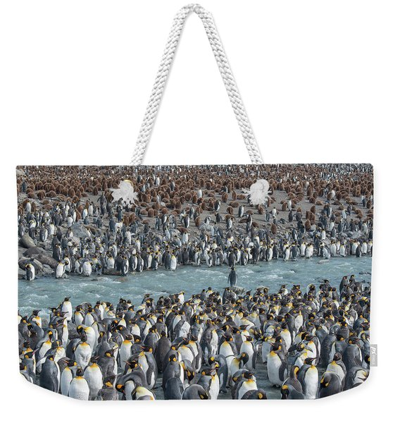Colony Of King Penguins, Aptenodytes Weekender Tote Bag