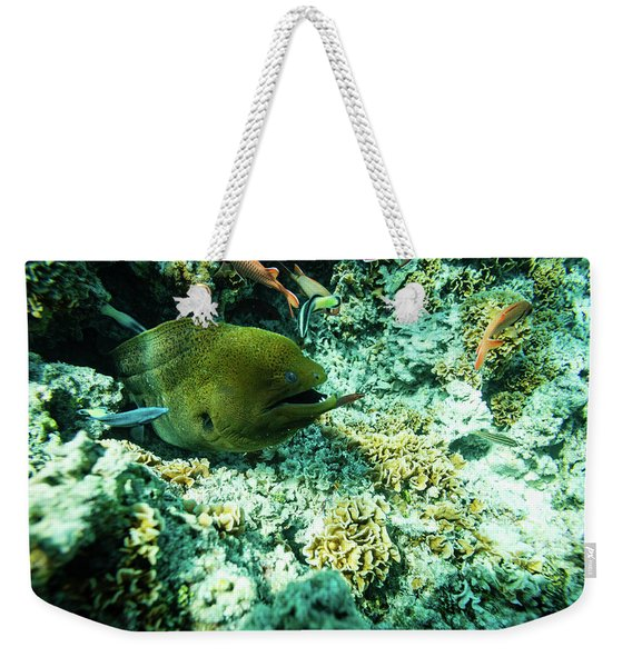 Coral Reef Fish And Moray Eel Among Weekender Tote Bag