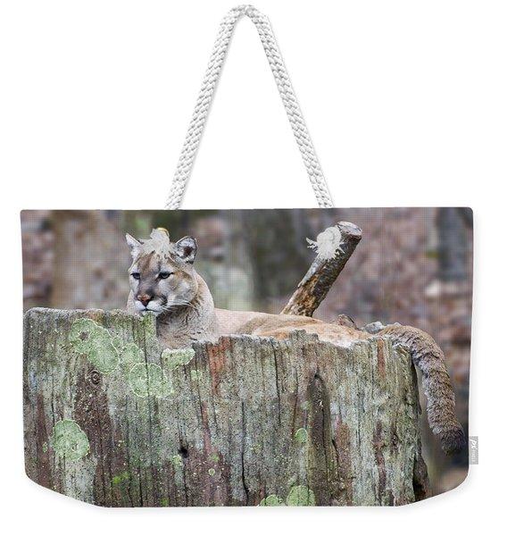 Cougar On A Stump Weekender Tote Bag