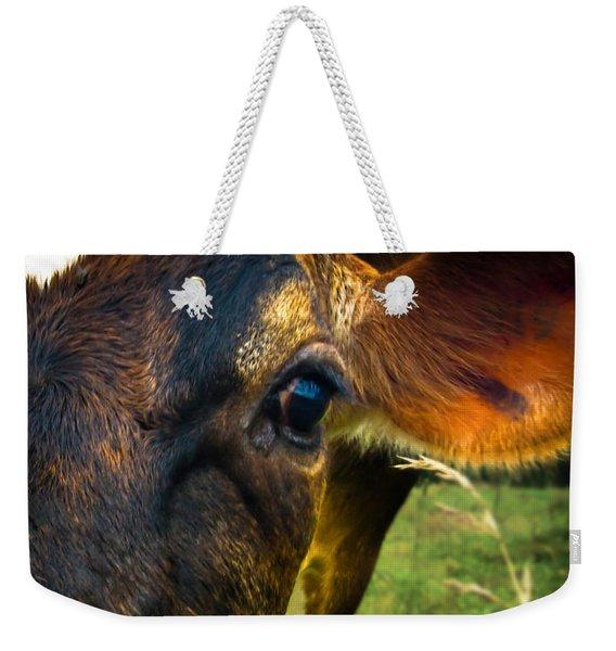 Cow Eating Grass Weekender Tote Bag