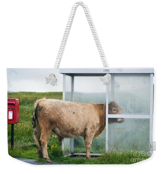 Cow In A Bus Shelter Weekender Tote Bag