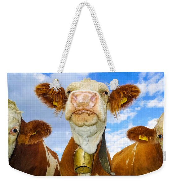 Cow Looking At You - Funny Animal Picture Weekender Tote Bag