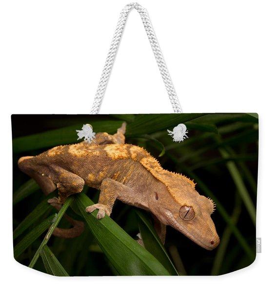 Crested Gecko Rhacodactylus Ciliatus Weekender Tote Bag