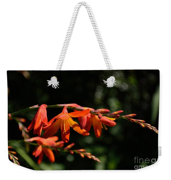 Weekender Tote Bag featuring the photograph Crocosmia 'dusky Maiden' Flowers by Scott Lyons