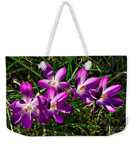 Weekender Tote Bag featuring the photograph Crocus In The Grass by Jeremy Hayden
