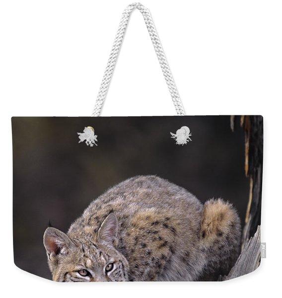 Crouching Bobcat Montana Wildlife Weekender Tote Bag