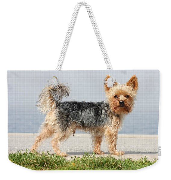 Cut Little Dog In The Sun Weekender Tote Bag