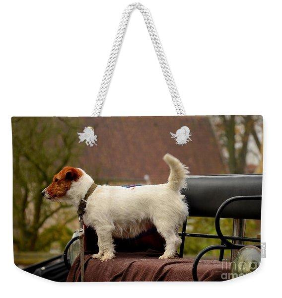 Cute Dog On Carriage Seat Bruges Belgium Weekender Tote Bag