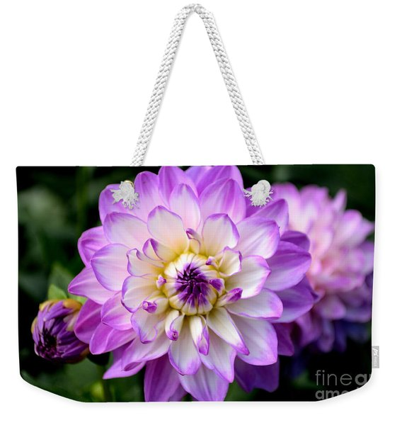 Weekender Tote Bag featuring the photograph Dahlia Flower With Purple Tips by Scott Lyons
