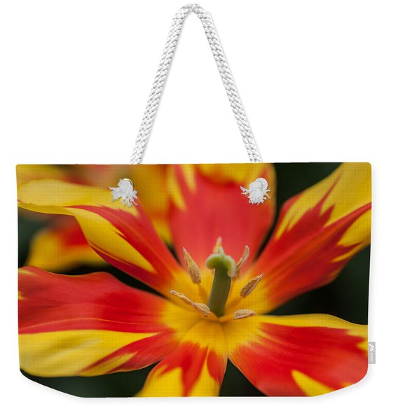Dappled Tulip 1. The Tulips Of Holland Weekender Tote Bag
