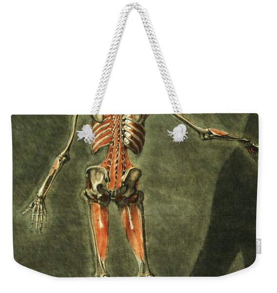 Deep Muscular System Of The Back Weekender Tote Bag