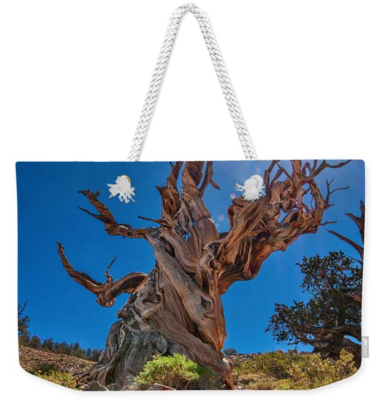 Eternity - Dramatic View Of The Ancient Bristlecone Pine Tree With Sun Burst. Weekender Tote Bag