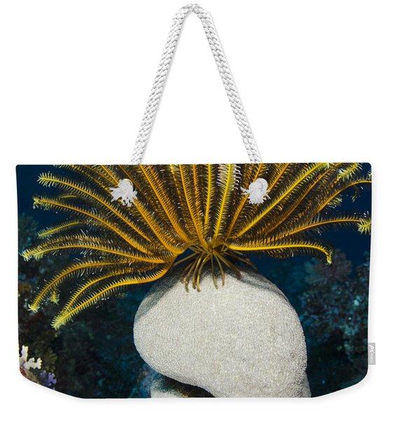 Feather Star On Rainbow Reef Fiji Weekender Tote Bag