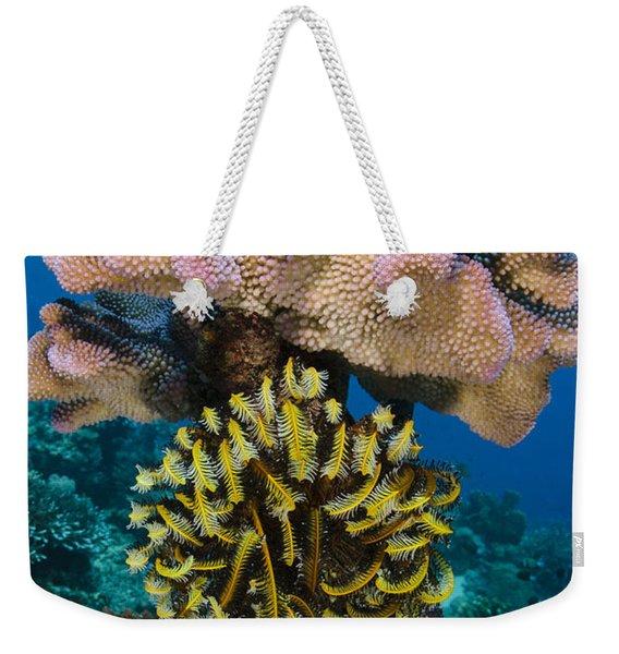 Feather Star Rainbow Reef Fiji Weekender Tote Bag