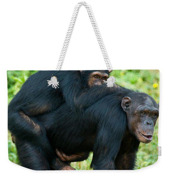 Female Chimpanzee Pan Troglodytes Weekender Tote Bag