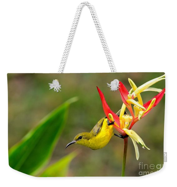 Female Olive Backed Sunbird Clings To Heliconia Plant Flower Singapore Weekender Tote Bag