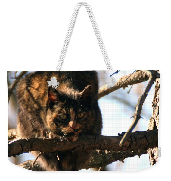 Weekender Tote Bag featuring the photograph Feral Cat In Pine Tree by William Selander