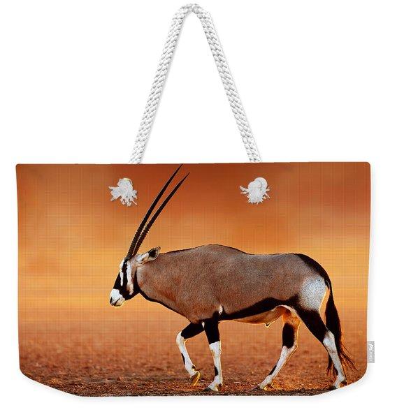 Gemsbok On Desert Plains At Sunset Weekender Tote Bag