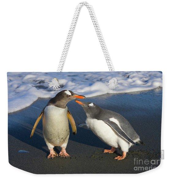 Gentoo Penguin Chick Begging For Food Weekender Tote Bag