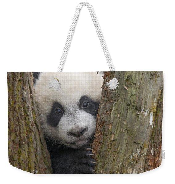 Giant Panda Cub Bifengxia Panda Base Weekender Tote Bag