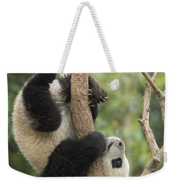 Giant Panda Cub In Tree Chengdu Sichuan Weekender Tote Bag