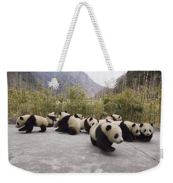 Giant Panda Cubs Wolong China Weekender Tote Bag