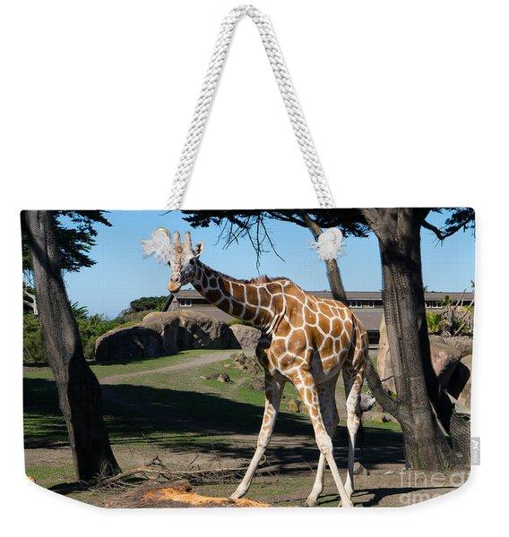 Giraffe Dsc2849 Weekender Tote Bag